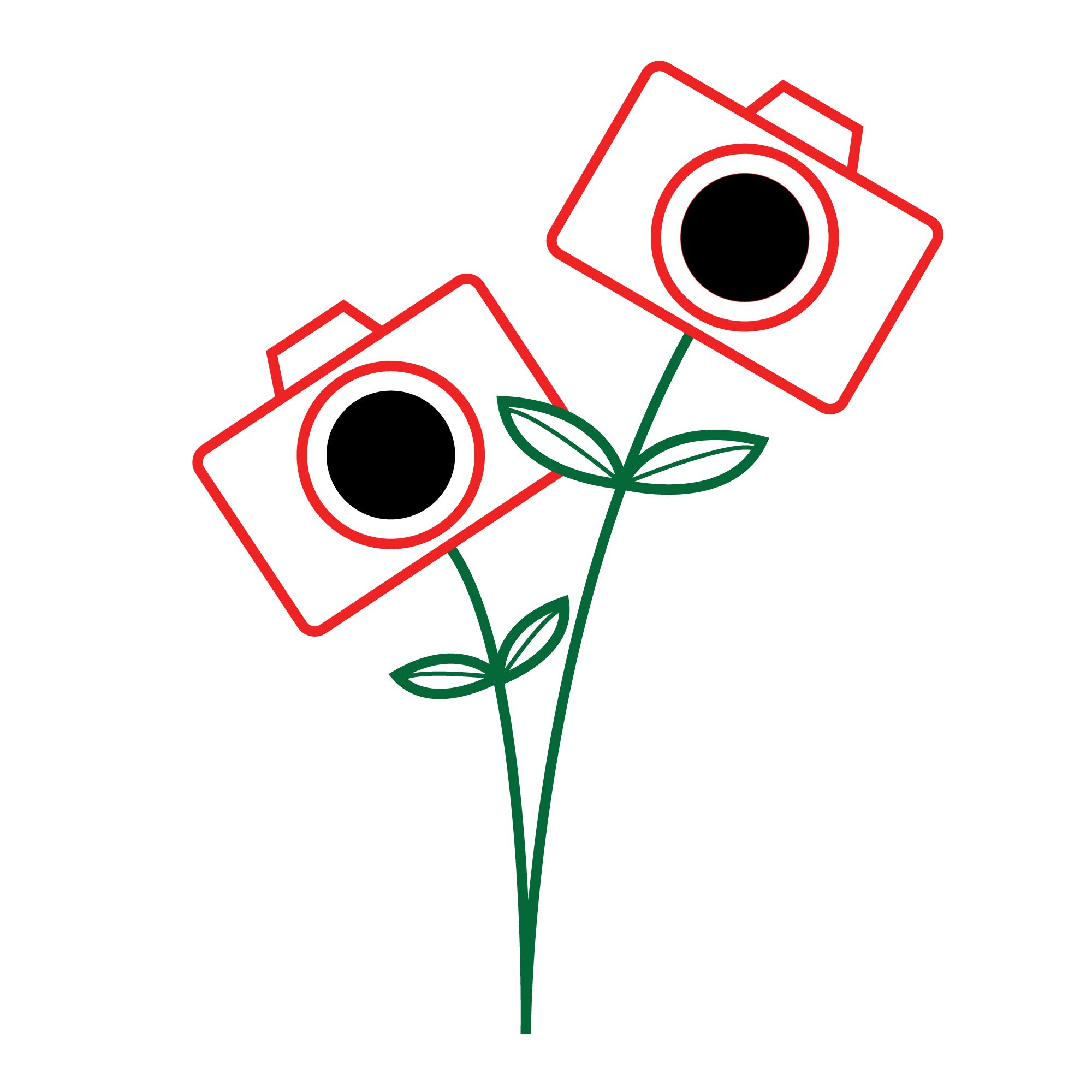 illustration-photosynthesis